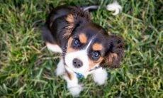 Conheça os dilemas mais comuns de quem resolve adotar um cão pela primeira vez