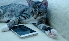 Aplicativo ajuda você a cuidar do seu pet e da vida social dele nas redes sociais