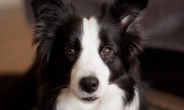 Estudo mostra que alguns cães têm inteligência e talento muito acima da média