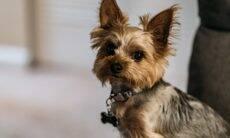 Cães identificam quando humanos mentem, diferentemente das crianças