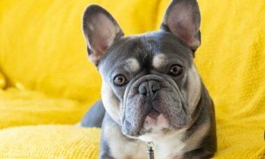 A vizinhança agradece: 14 raças de cães que latem pouco