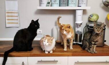 Tem vários gatos em casa, mas só um precisa de dieta? Saiba o que fazer