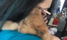 Doença terrível provocada por um coronavírus leva gatos à morte