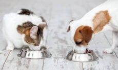 Saiba como evitar infecções gastrointestinais em filhotes de pets