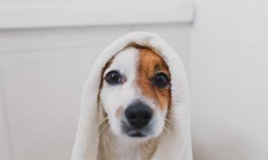 Inverno: que tal dar um banho a seco no seu pet?