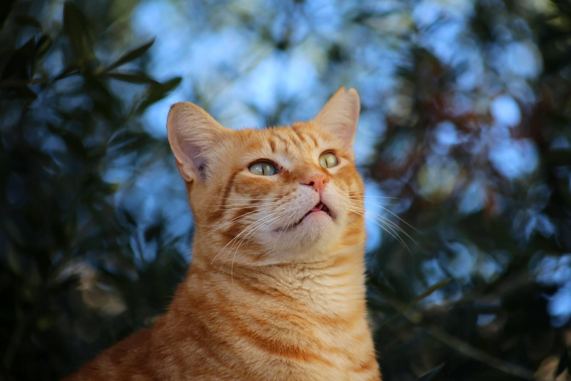 Quer que seu gato seja mais afetuoso? Deixe que ele se sinta no comando