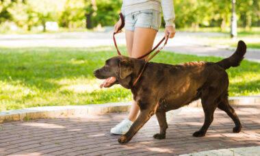 6 pecados que muita gente ainda comete ao passear com cães