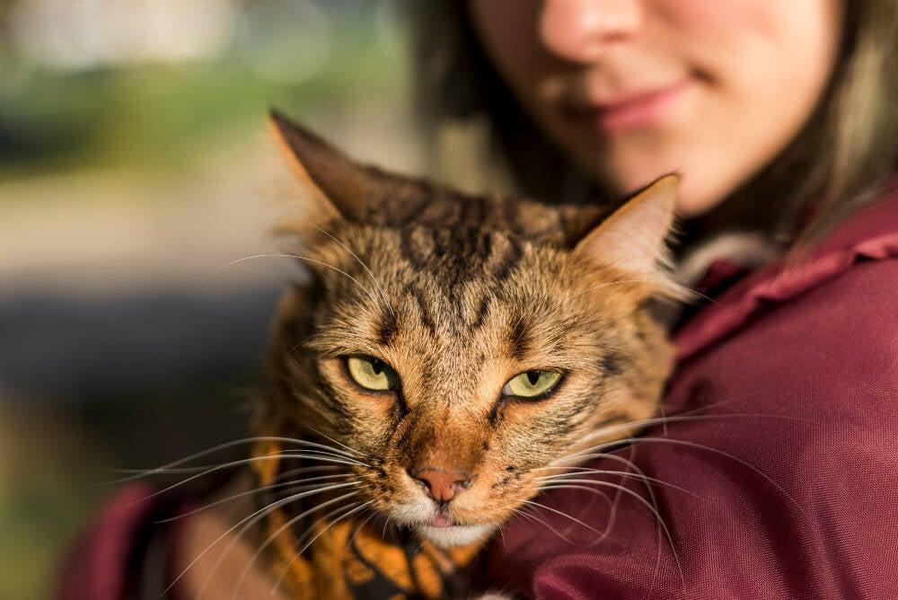 Seu gato gosta de lamber e morder seu nariz? A ciência explica por quê