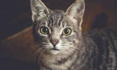 Entenda por que seu gato fica um tempão olhando pra você sem piscar