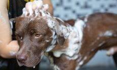 Posso dar banho no meu pet em dias muito frios?