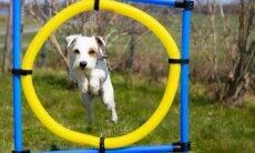 Inspire-se na Olimpíada e crie competições esportivas com o seu cão ou gato