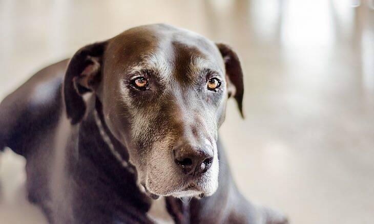 Cientistas estudam 30 mil cães para esticar a vida e melhorar a velhice dos bichos