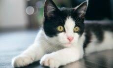 5 dicas para deixar o seu gato alegre; e saiba quando ele está triste