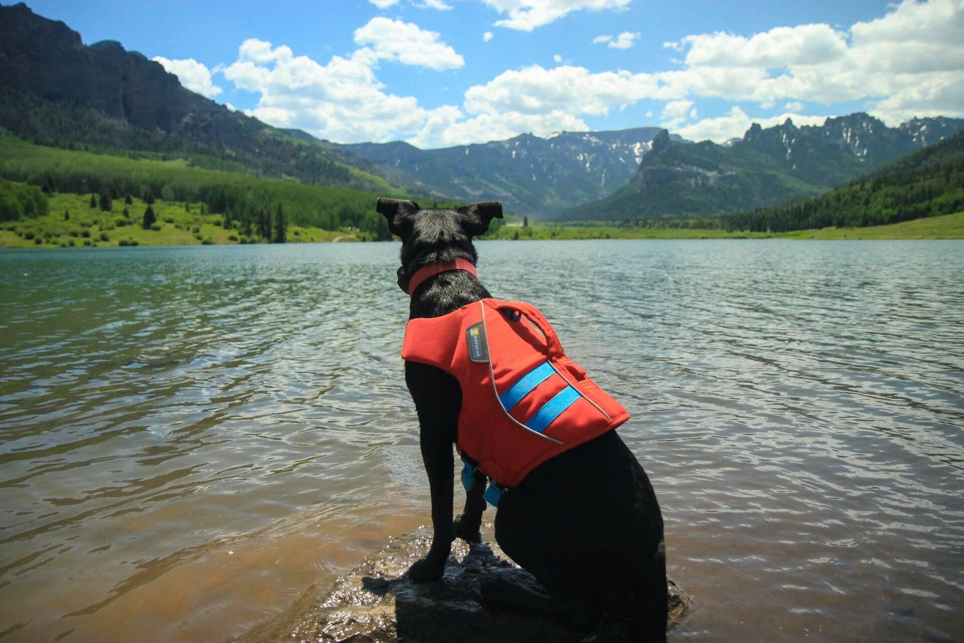 Conheça os cães treinados para encontrar cadáveres debaixo d'água