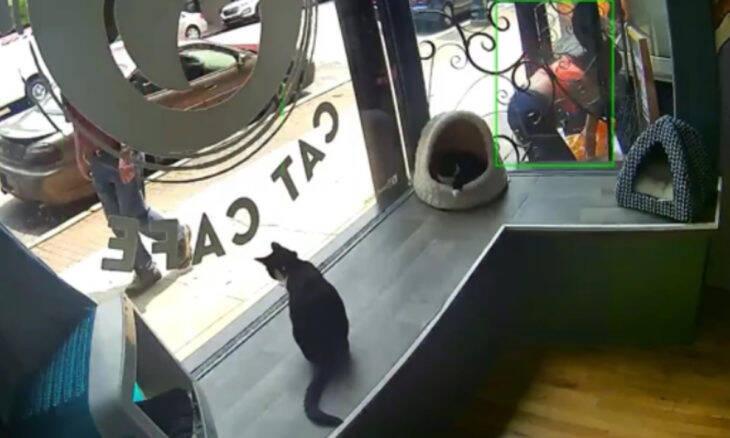 Vídeo: câmera flagra mulher abandonando gatos cobertos de moscas na porta de café