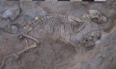 1.400 cães enterrados na época do império persa intrigam arqueólogos