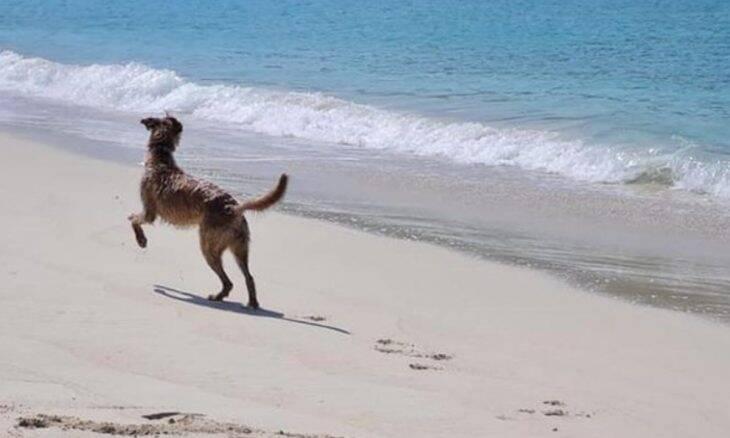 Vídeo: cão cego por causa de dono relapso muda de família e 'enlouquece' na praia