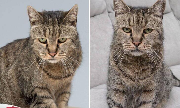 Fake news: gato mais velho do mundo não está vivo... morreu aos 32 anos!