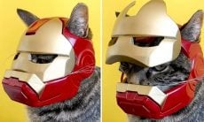 Vídeo: dono usa impressora 3D e faz capacete do Homem de Ferro para seu gato