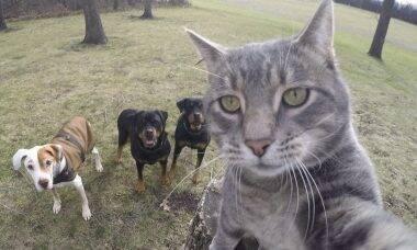 Conheça Manny, o gato que é o rei da selfie na internet