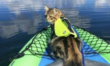 Conheça os gatos aventureiros mais famosos nas redes sociais