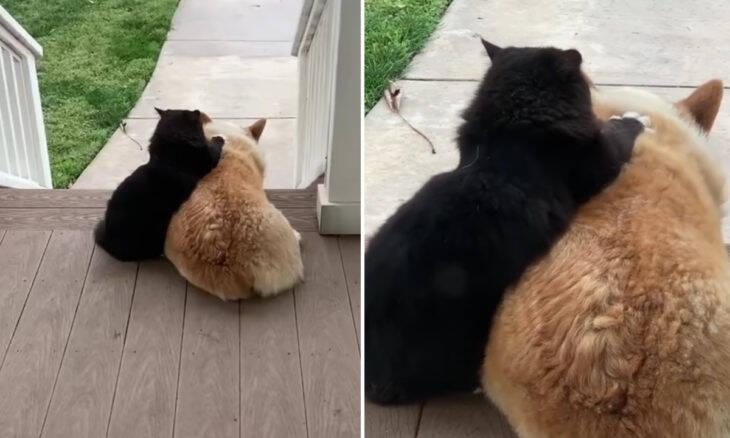 Vídeo: gato e cachorro vizinhos são os melhores amigos do bairro