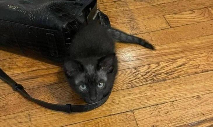 Gato passa por transformação surpreendente e fica com aspecto de lobisomem