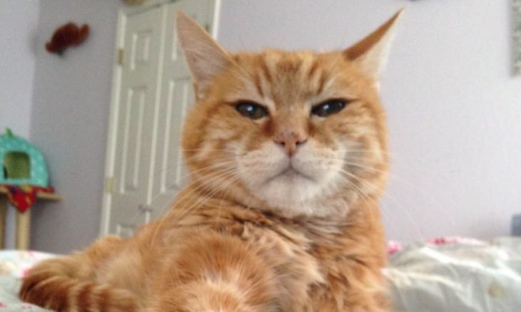 Após 18 anos, donos abandonam gato por não querer mais pelos em casa