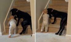 Vídeo: cão-babá evita que bebê se machuque na escada de casa