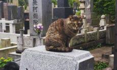 Gatos 'invadem' cemitério em Tóquio e aliviam o luto das pessoas