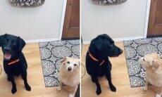 Vídeo: dona diz seu nome pela primeira vez aos cães da casa, e a reação deles é hilária