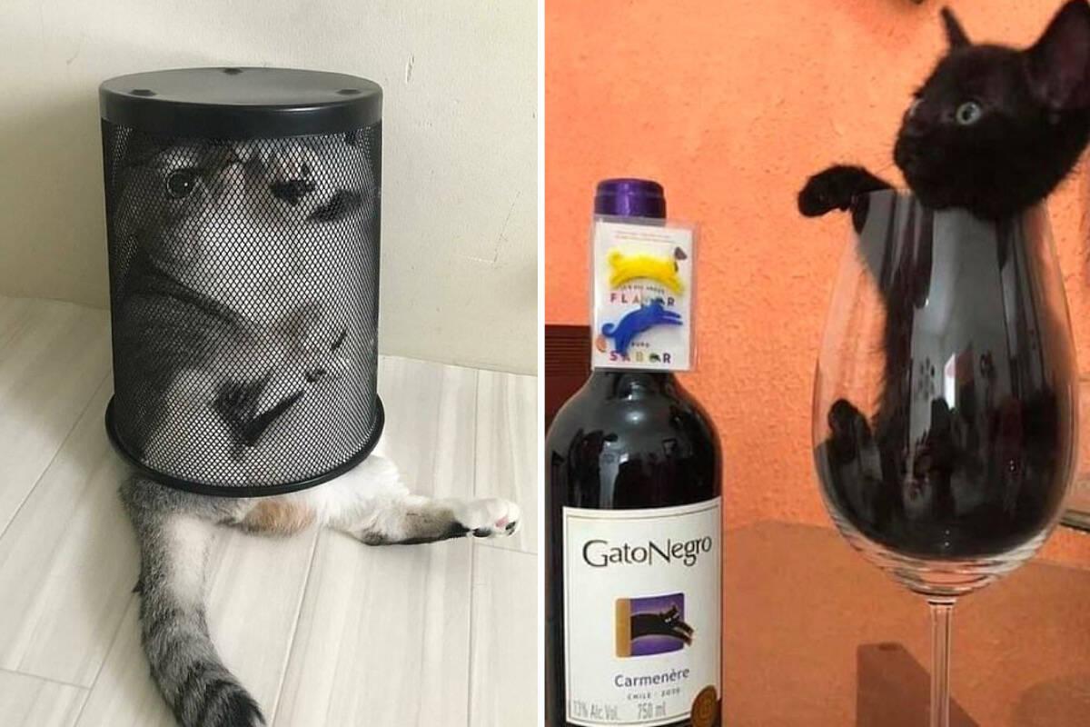 Fotos: veja gatos em uma série de situações bizarras, divertidas ou curiosas