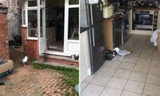 Vídeo: gaivota é pega invadindo casa para roubar comida de gato