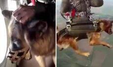 Vídeo: militares russos treinam cães para saltar de paraquedas