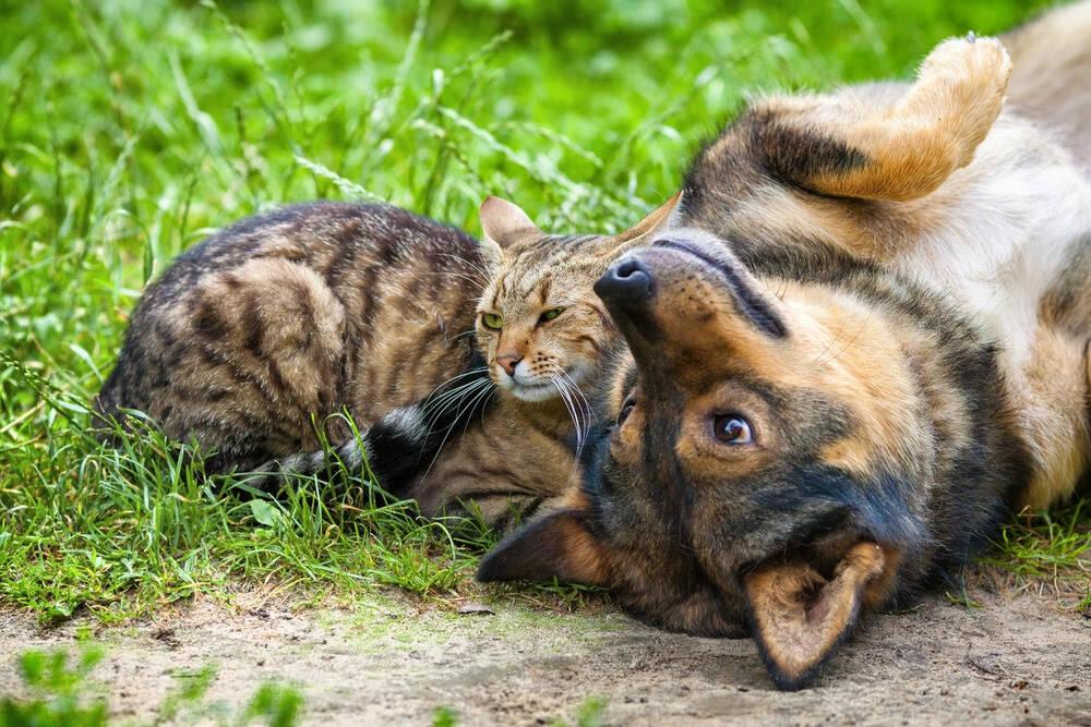 Dia do Vira-Lata: 9 mitos e verdades sobre os cães e gatos sem raça definida