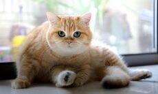 Os gatos reconhecem quando são chamados pelo nome?