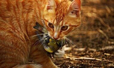 Entenda por que seu gato 'presenteia' você com animais mortos