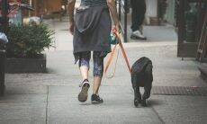 Israel vai usar teste de DNA para multar dono que não limpa cocô de cachorro