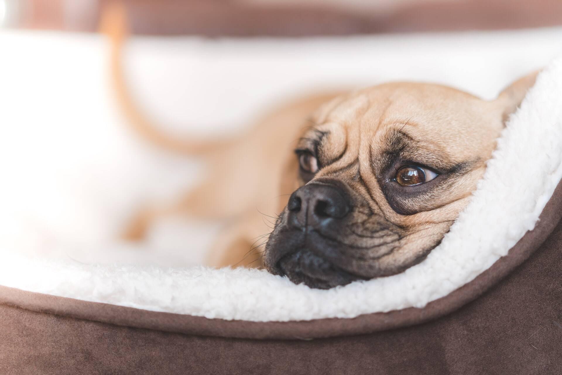 12 sinais de que o seu cão está com problemas de pele