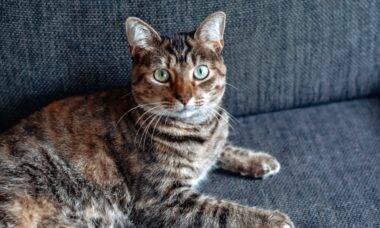Um aplicativo promete dar fim à depressão do seu gato