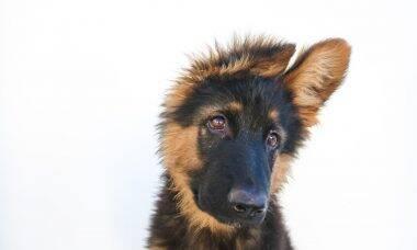 As 15 melhores raças para quem quer ter o primeiro cãozinho da vida