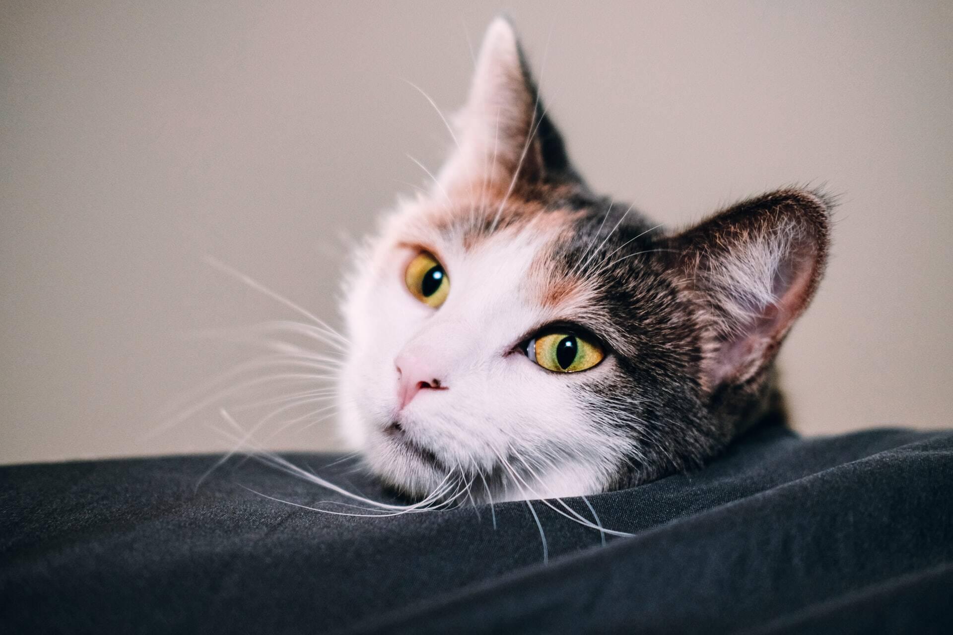 Conheça os 14 problemas de saúde mais comuns em gatos e saiba quais são os tratamentos