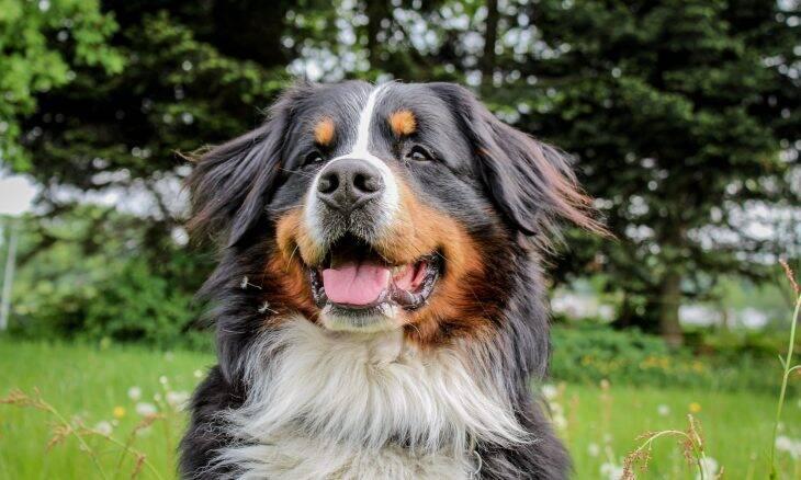 As 10 melhores raças de cães para quem vive sozinho