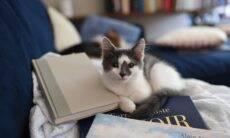 Gato senta em teclado e 'escreve' livro que lidera lista dos mais vendidos