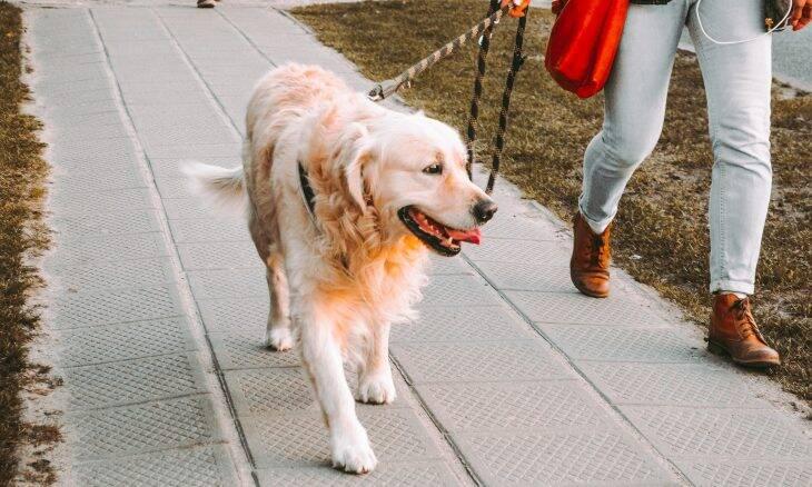 Como os cães sabem a hora da refeição e do passeio? A ciência tenta explicar