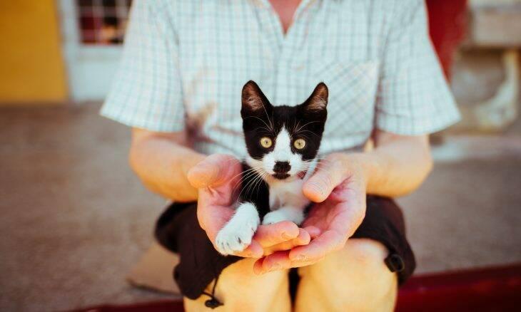 Dicas tornam perfeitos os primeiros 30 dias entre você e seu gato recém-adotado