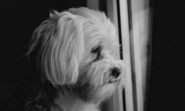 Crueldade animal: 300 cães de rua são mortos por envenenamento na Índia