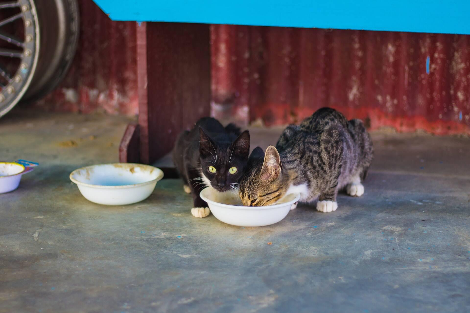 Universidade demite funcionários que alimentam gatos de rua nos EUA