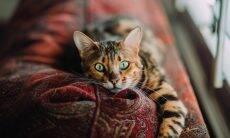 Com humanos mais tempo em casa, gatos ficam estressados, dizem especialistas