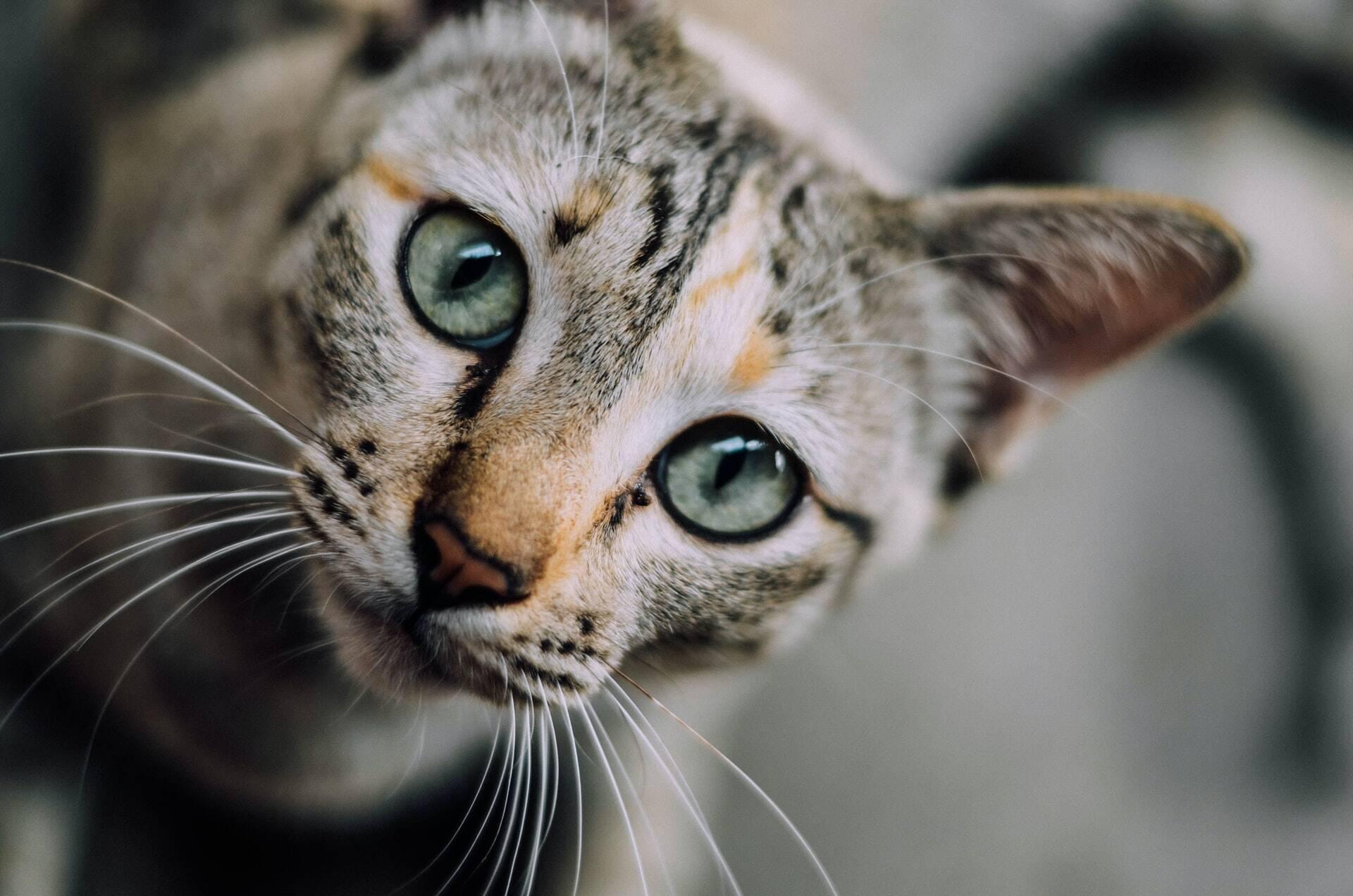 Os 6 comportamentos mais bizarros dos gatos e por que eles fazem isso